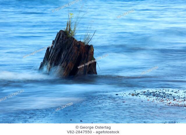 Stump in Lake Superior at Meyers Beach, Apostle Islands National Lakeshore, Wisconsin