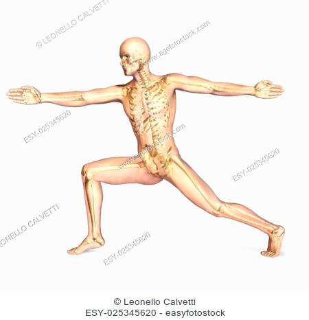 Human male in athletic dynamic posture, with full skeleton superimposed. On white background, with clipping path included
