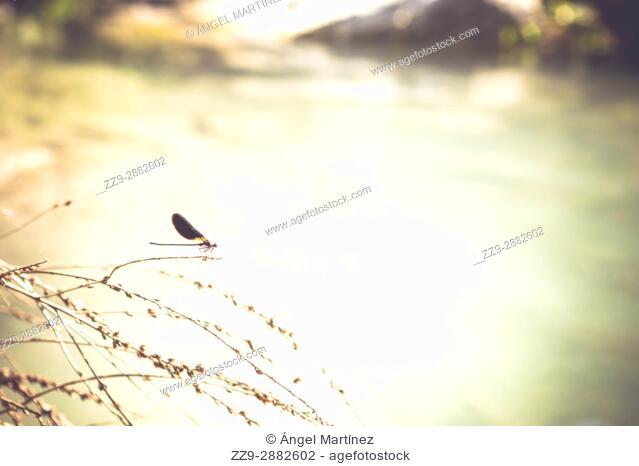Dragonfly on lake