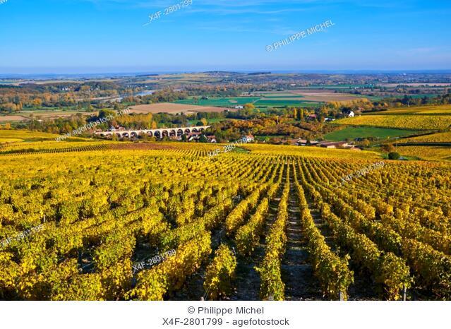 France, Cher 18, vineyard of Sancerre