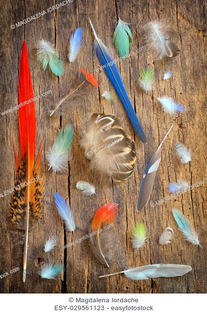 Collection of different color feathers on old wooden table