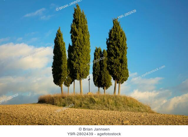 Tree circle surrounds a memorial cross on a hill outside San Quirico d'Orcia, Tuscany, Italy