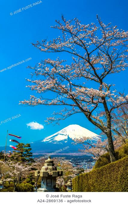 Japan, Gotemba City, Cherry Blossoms and Mount Fuji