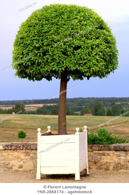 Oranger en pot des jardins du chateau de Digoine, Palinges, Saone et Loire, Bourgogne, France