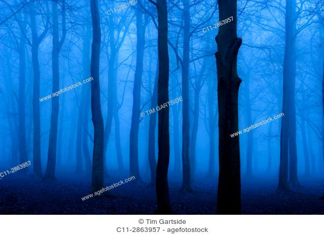 trees,forest,night,dusk,evening,spooky,misty,foggy,eerie,no one,noone,blue,cold,dark,mysterious,moody,