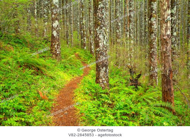 Pioneer Indian Trail, Siuslaw National Forest, Oregon