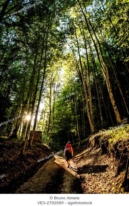 ArteNatura route in the woods of the Sella Valley, Borgo Valsugana (Autonomous Province of Trento, Region of Trentino-Alto Adige, Italy)