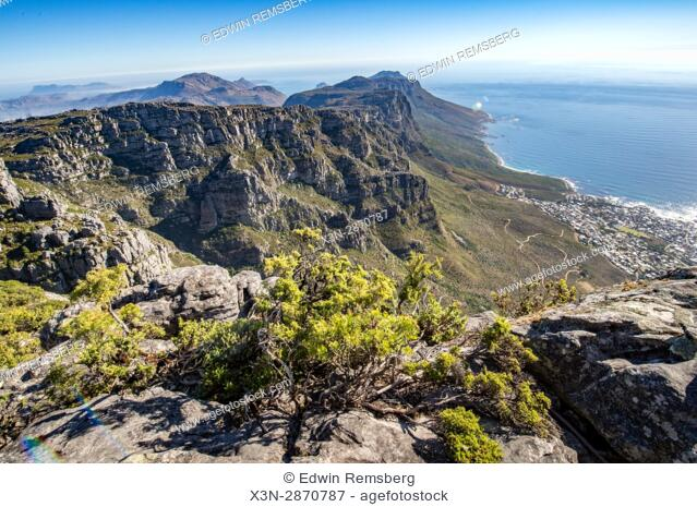 Greenery and view of the cliffs of Table Mountain, located in Cape Town, South Africa
