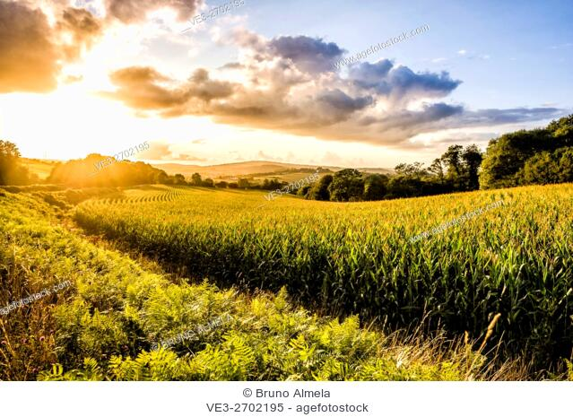 Sunset over corn fields near Kerbolé (department of Finistère, region of Bretagne, France)