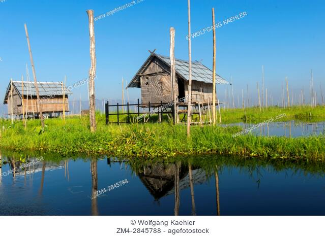 View of bamboo huts on stilts in the floating man-made islands and floating gardens which are kept in place with bamboo sticks that are attached to the bottom...