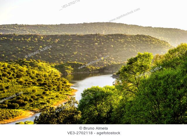 A wooded pasture with holm oaks and cork oaks in Tajo River, near Villarreal de San Carlos in Monfragüe national Park (Province of Cáceres