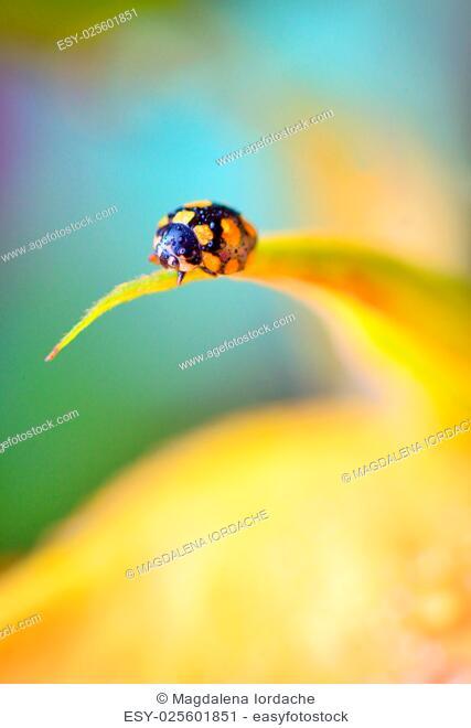 Details of ladybug on spring flowers